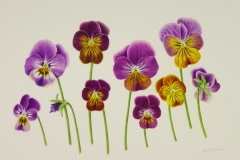 Violas 'Antique Shades'