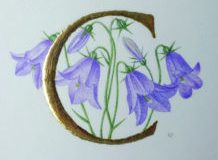 C for Campanula, on vellum