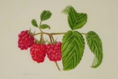 Raspberries on vellum