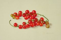 Redcurrants on vellum