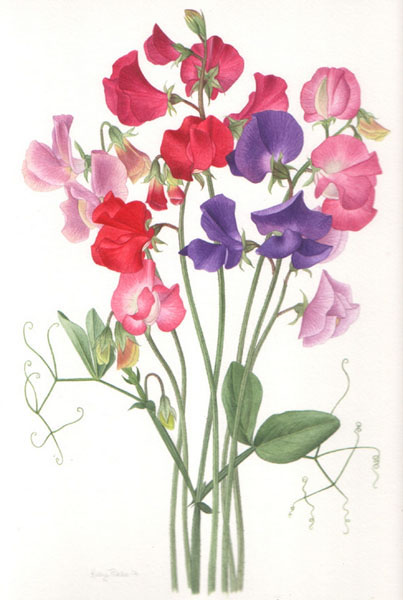 Sweet Peas - Kathy Pickles